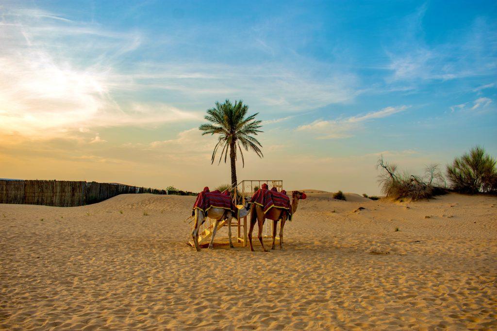 Desert Safari in UAE